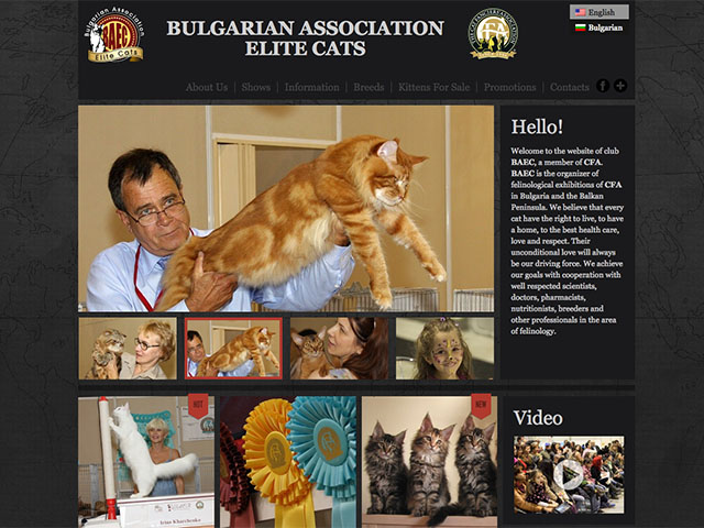 Bulgarian Association Elite Cats